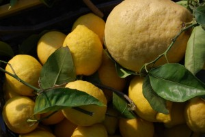 Naples limoncello factory